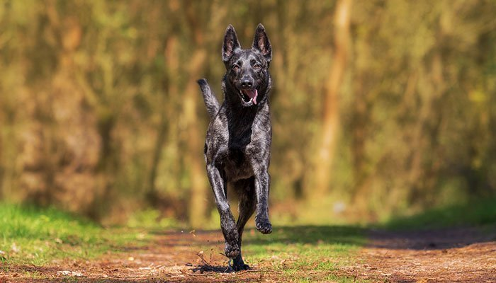 Finest Dog Vitamins for Joints