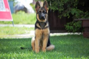 is-there-a-dog-hip-dysplasia-treatment