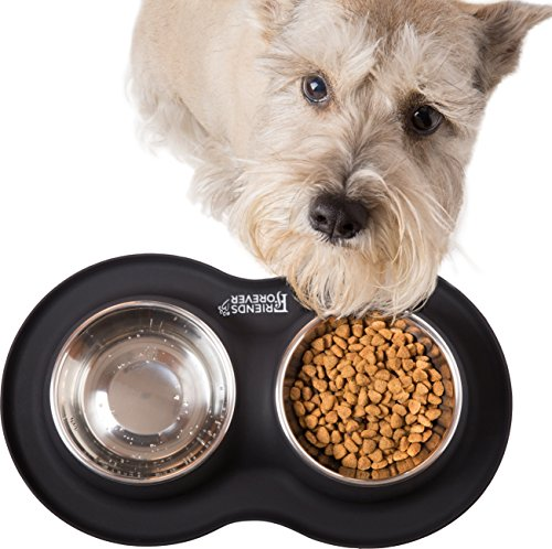 Friends Forever Stainless Steel dog feeding station