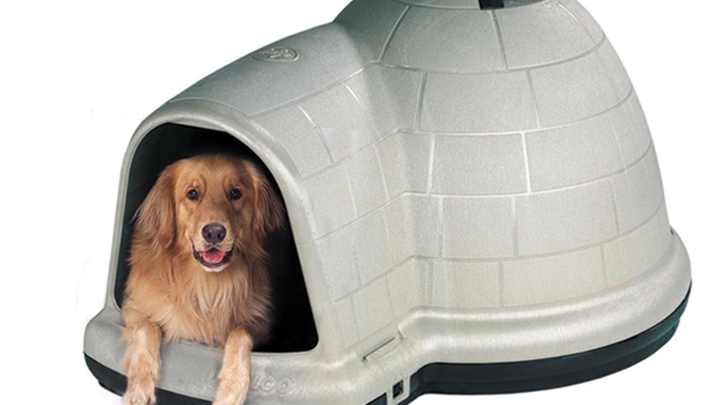 best igloo dog house review
