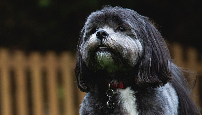 8 Best Dog Foods for Shih Tzu's in 2020
