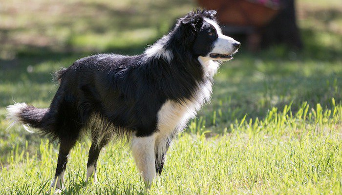 Easiest Dog Breeds to Train