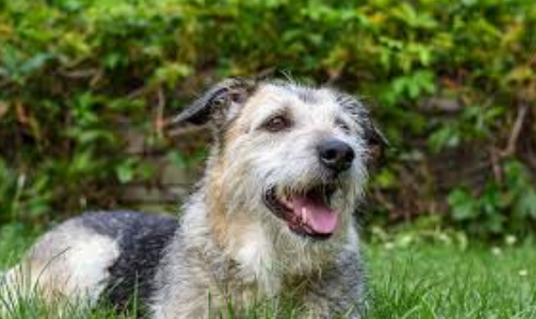 The Pros and Cons of a Vegetarian Diet for Dogs