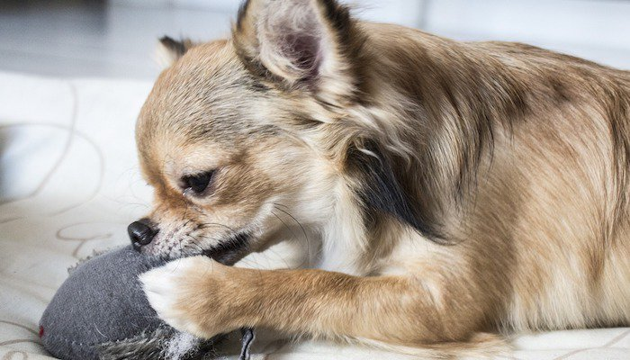 Best Chew Toys for Puppies Review
