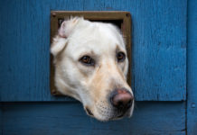 Dog Door Review