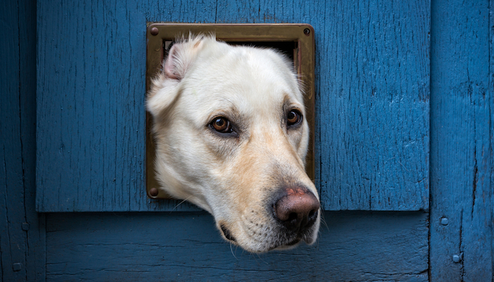 10 Best Dog Doors in 2020