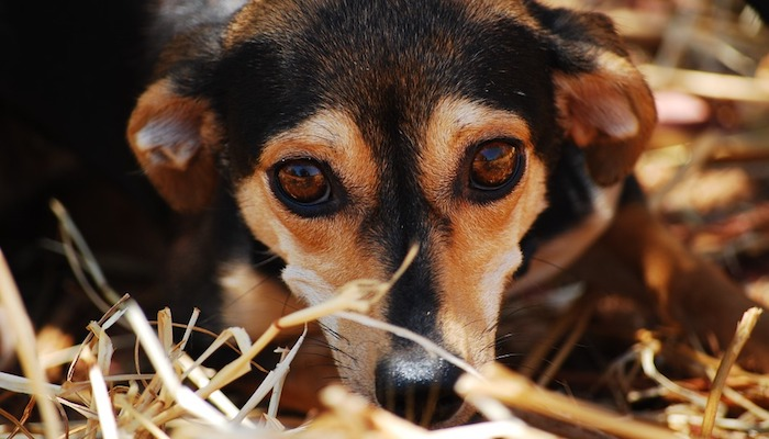 Treating Separation Anxiety in Dogs