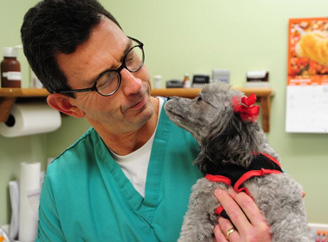 Veterinarian approved content TreeHousePuppies