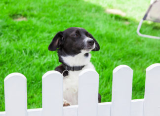 Dog Behind Gate