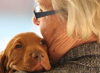 Dog Breeds for Seniors