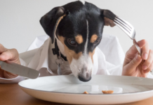 Therapeutic Diet for Dogs