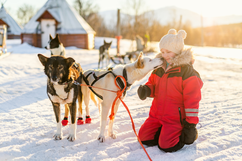 Little girl petting Sled Dogs