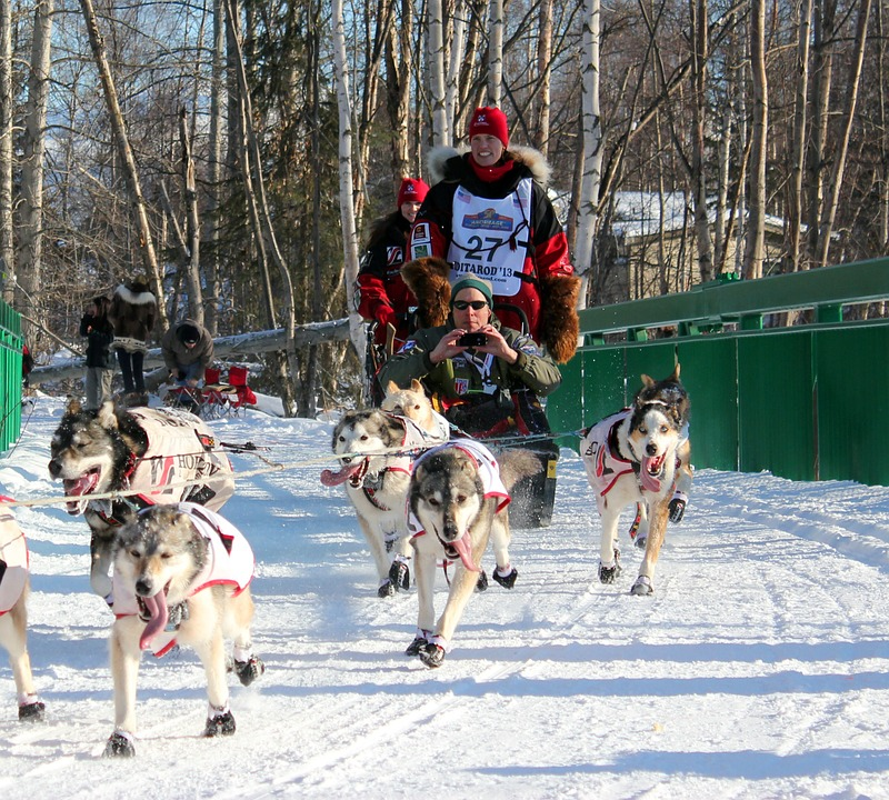 Sled Dog Team in Race