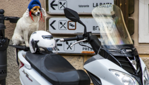 Dog on a motorcycle