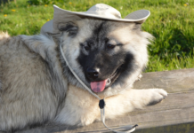 Dog wearing hat