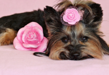 Dog with pink flower on the head