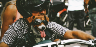 Man with dog on motorcycle