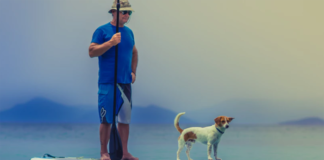 Man with dog on paddle board