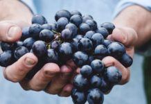 Person holding a bunch of grapes