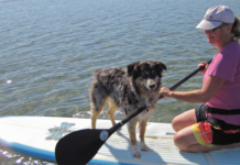 Woman paddle boarding with dog