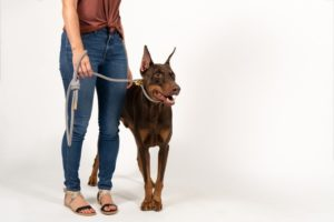 Man holding a dog on a leash