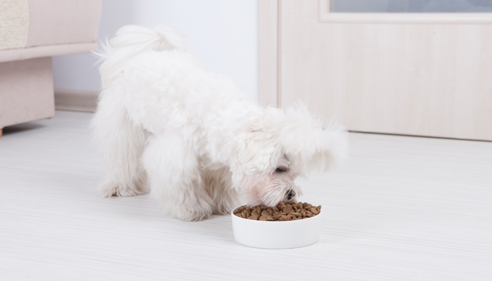 10 Best Foods For Maltese Dogs 2019 Review