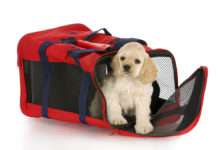 cocker spaniel puppy in a red soft sided dog crate bag with reflection on white background