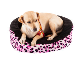 dog lying in pet bed